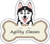 for fun dog agility